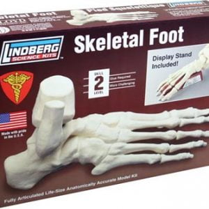 Skeletal Foot Model Kit Lindberg 71314